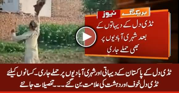Locust Swarms Have Been Spotted in 52 Districts of Pakistan
